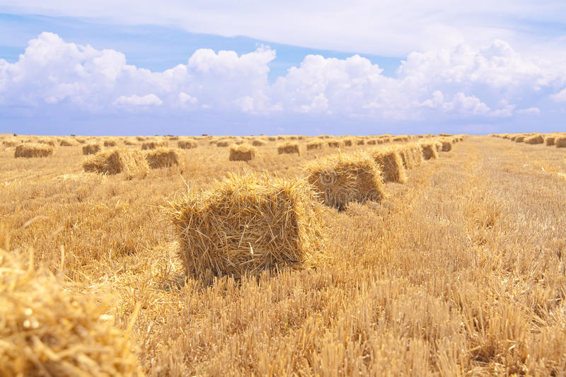 Download Wheat field stock photo. Image of agriculture, machine - 10454730