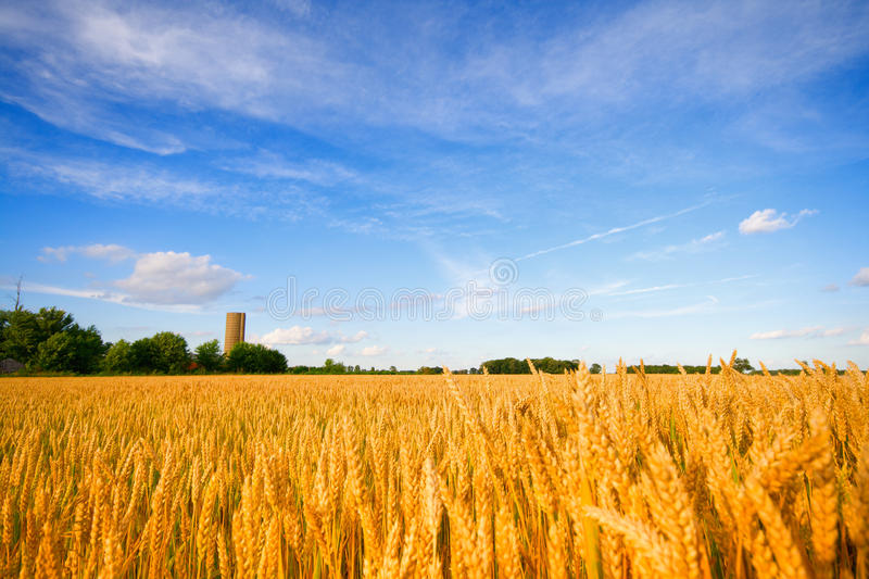 Download Wheat Field Stock Photos - Image: 12082403