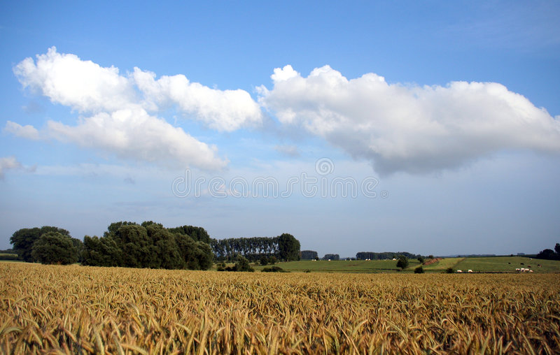 Download Wheat field stock image. Image of rural, clouds, wheat - 159041