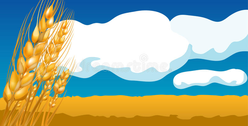 Wheat Field. Against a background of blue sky with clouds royalty free illustration