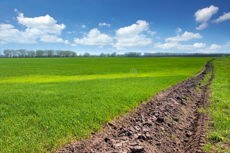 Download Wheat field stock photo. Image of spring, farming, fresh - 29004472