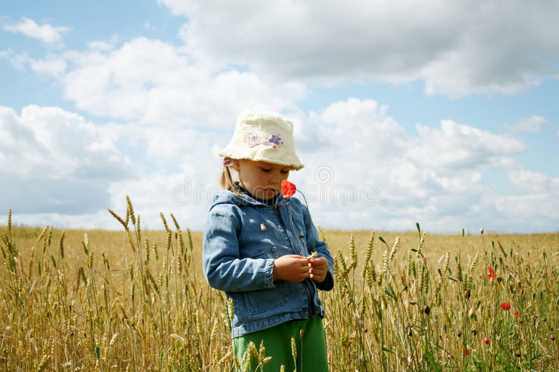 In the wheat field stock photo