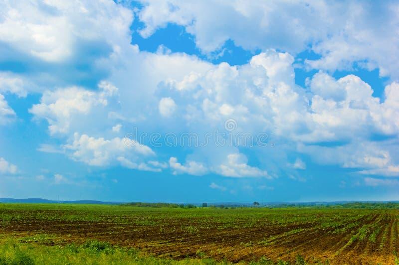Download Wheat field stock image. Image of grape, freshness, urban - 4838079