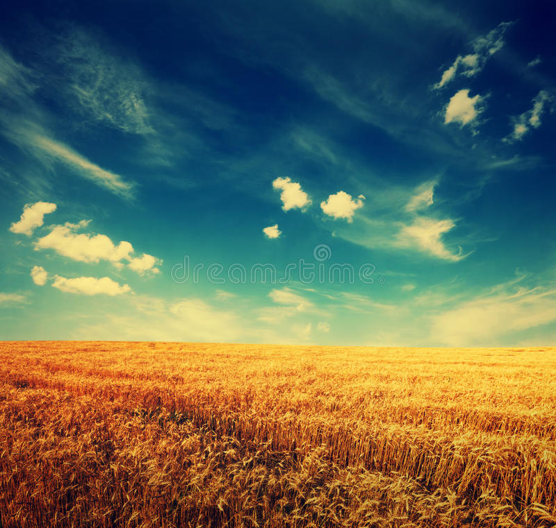 Free Wheat Field And Clouds On Sky Stock Image - 46633671