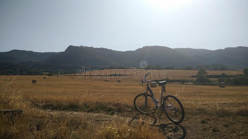 Wheat Field with a bike. royalty free stock photo