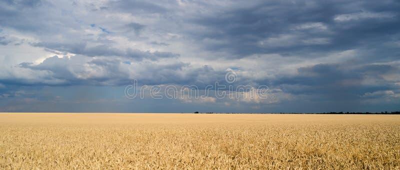 Wheat field and blue sky stock photos