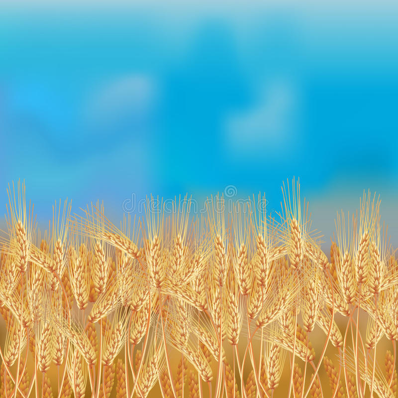 Wheat field with the blue sky royalty free illustration