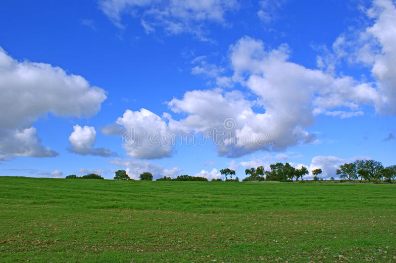 Wheat field and blue sky with white clouds and trees background royalty free stock photos