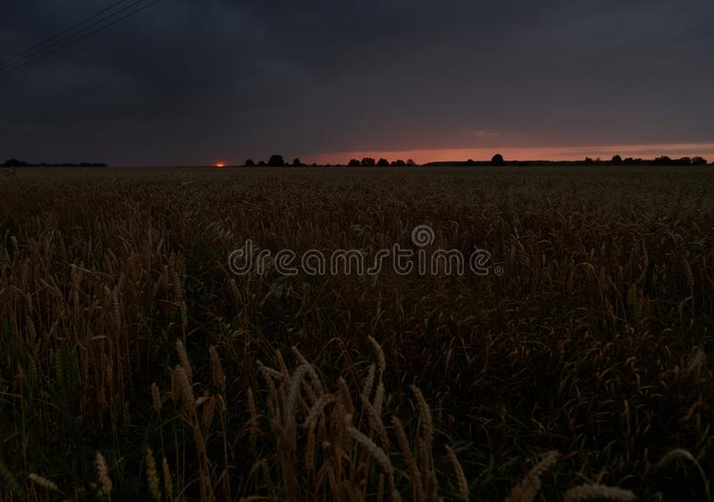 Wheat field with a cloudy sky in the background at sunset royalty free stock photos