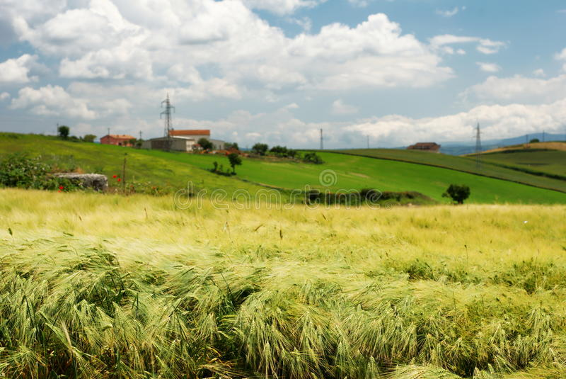 Download Wheat field and farmland stock image. Image of away, hillside - 13077299