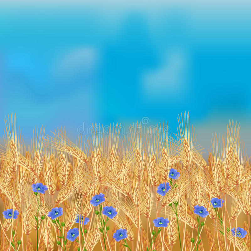 Wheat field with flax flowers and blue sky vector illustration