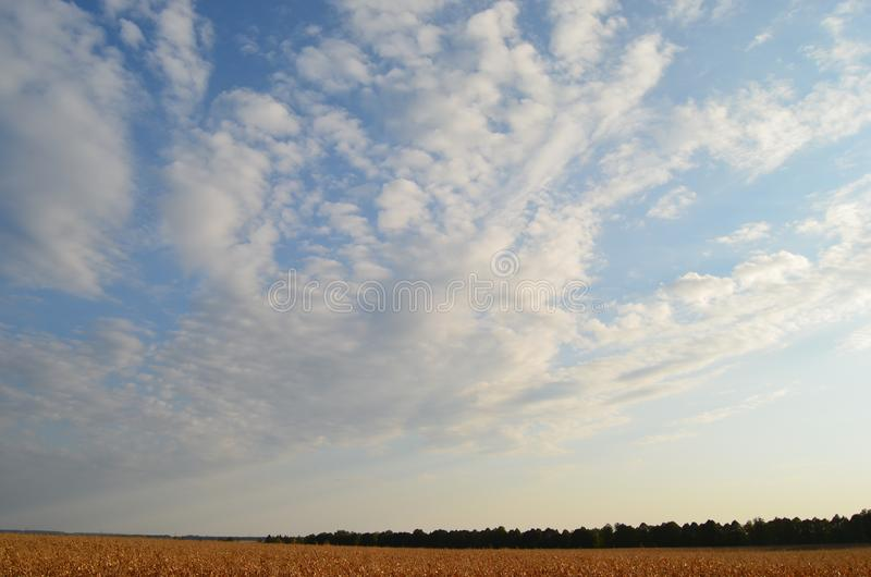 Wheat field, forest, blue sky. White cloud patterns. Noon stock image