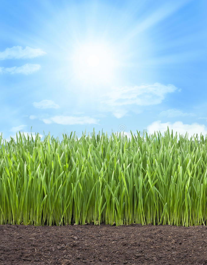 Wheat Field Grass Sun Sky royalty free stock image