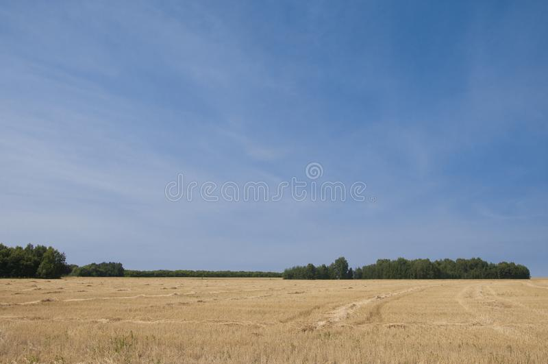 Wheat field after harvest and blue sky stock image