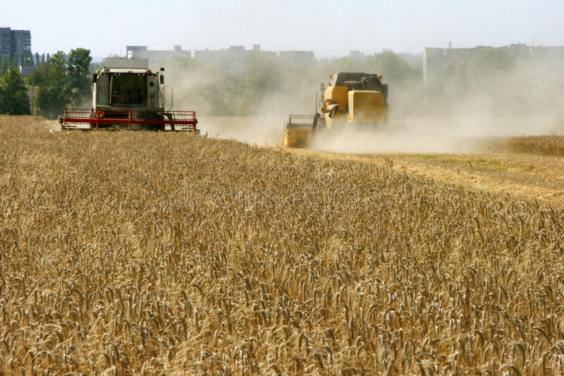 Download Wheat field harvesting stock photo. Image of glowing - 28583172
