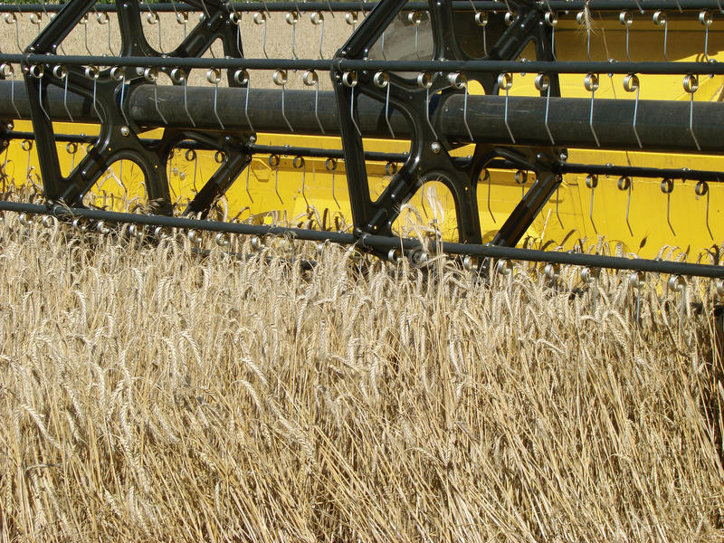 Download Wheat field harvesting stock image. Image of growth, environment - 28583175