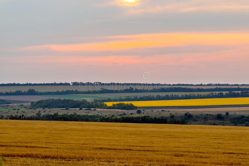 Wheat field landscape with path in the sunset time stock photo