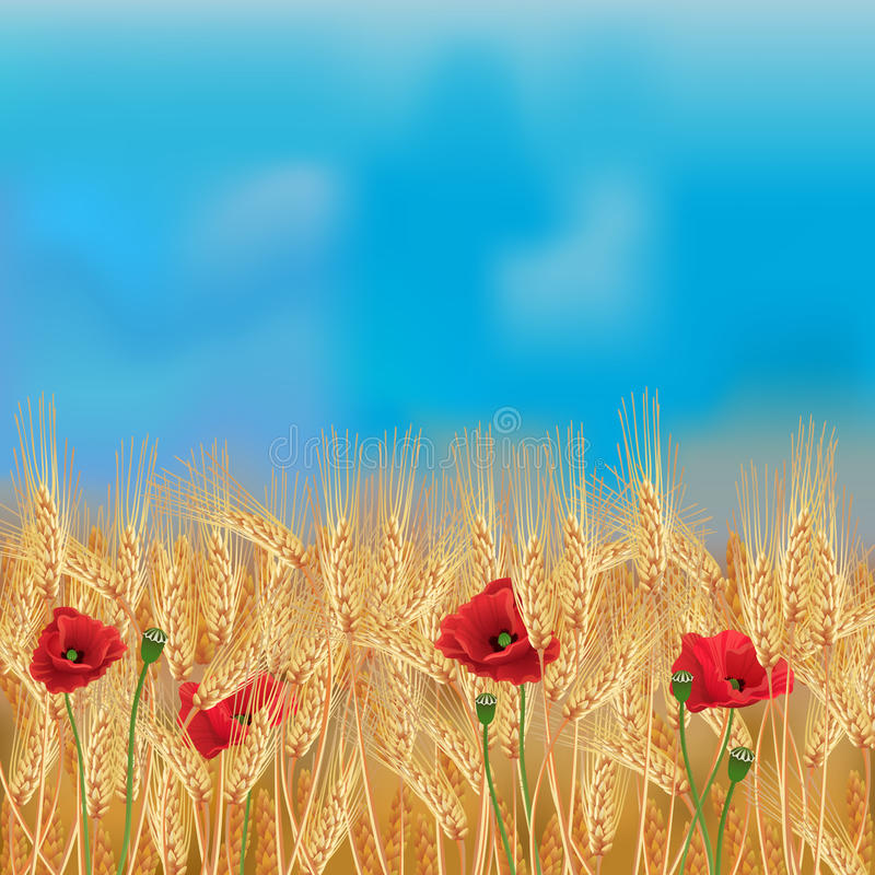 Wheat field with poppies and blue sky stock illustration