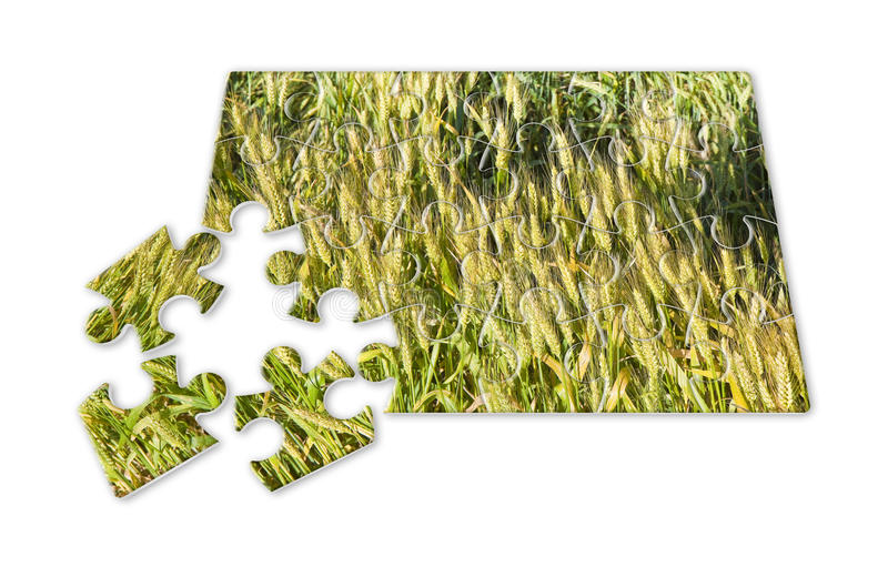 Wheat field in puzzle shape - concept image. Wheat field in puzzle shape - `Jigsaw puzzle` means game, but also problem, solutions, challenge, strategy stock photo