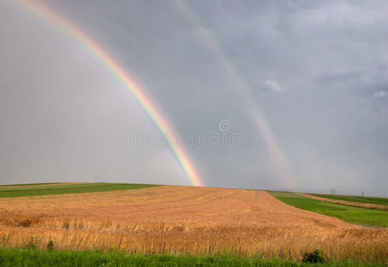 Download Wheat field with rainbow stock photo. Image of green - 25619170