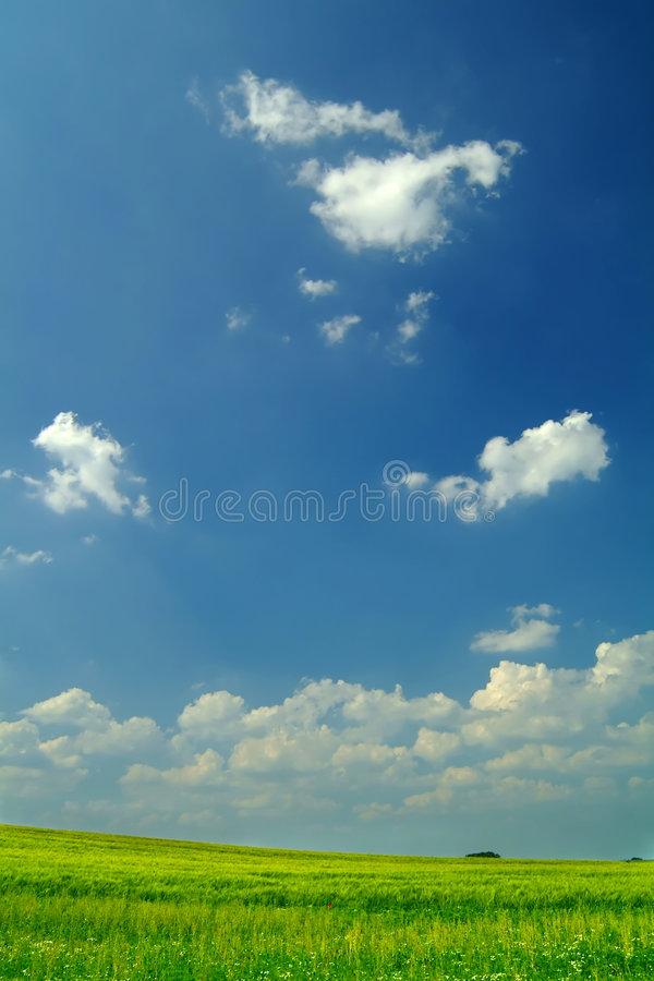 Wheat Field Under A Blue Sky Stock Photography