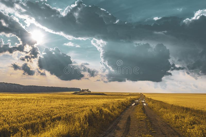 Wheat field under sunset cloud sky. Fields, clouds, skies, agricultures, wheats, blues, sunsets, crops, farms, landscapes, rurals, yellows, summers royalty free stock photo