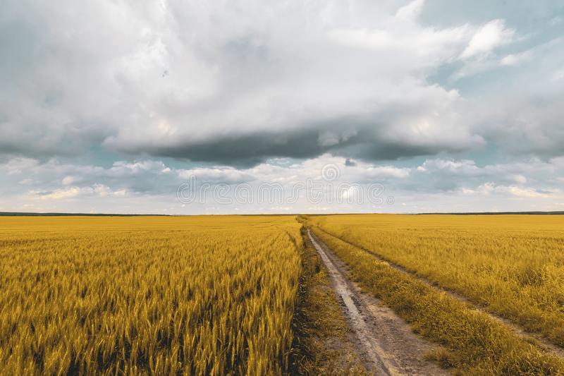Wheat field under sunset cloud sky. Fields, clouds, skies, agricultures, wheats, blues, sunsets, crops, farms, landscapes, rurals, yellows, summers stock images