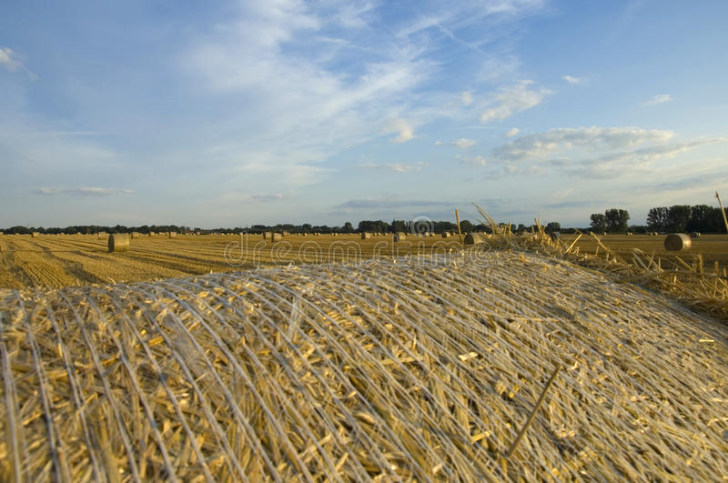 Wheat field view from a hay ball stock photo