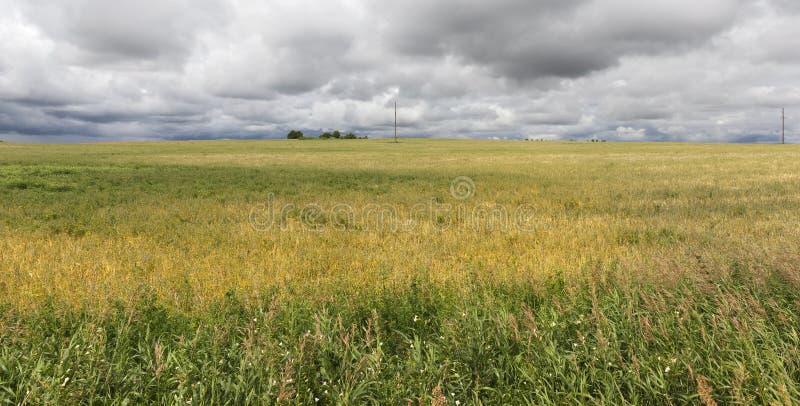 wheat field royalty free stock photos