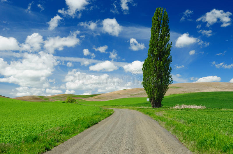 Download Wheat Fields And Country Road Stock Photos - Image: 16580853