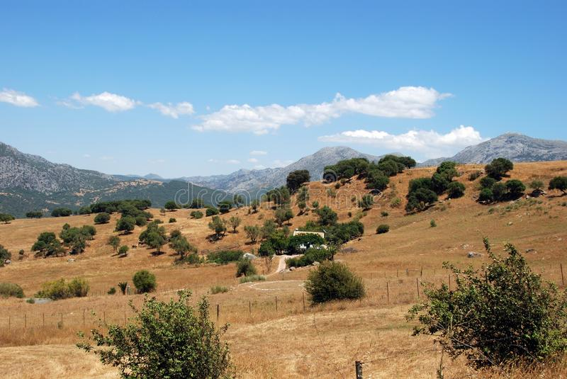 Wheat fields, Andalusia, Spain. royalty free stock photos