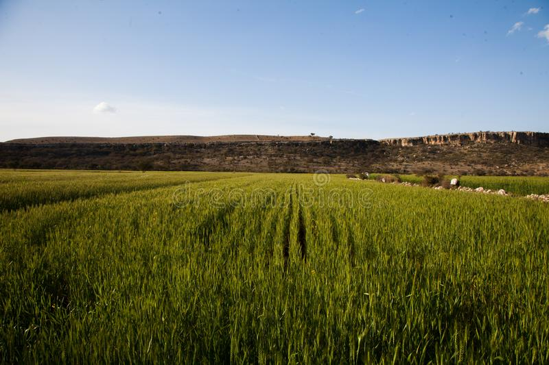 Wheat fields and hills royalty free stock photos