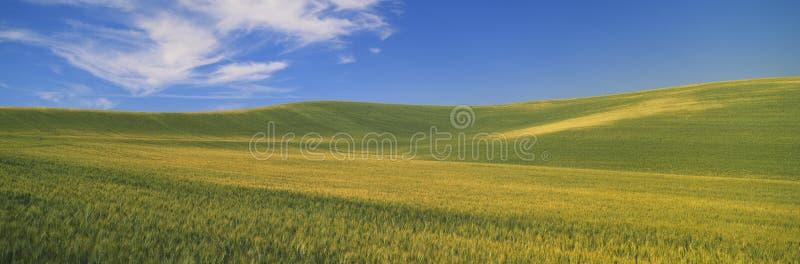 Wheat Fields, S.E. Washington royalty free stock images