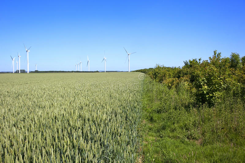 Download Wheat Fields With Wind Turbines Stock Photo - Image: 14859716