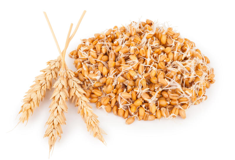Wheat germ with ears. On white background royalty free stock photography