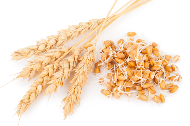 Wheat germ with ears. On white background stock photos