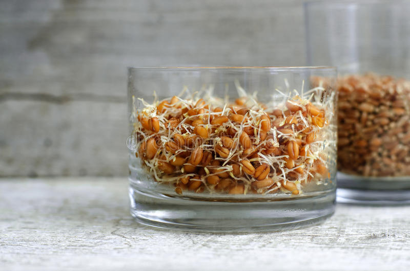 Wheat germ. In a glass royalty free stock photography