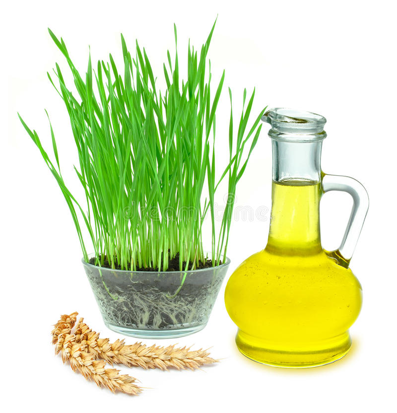 Wheat germ oil. Wheat grass and wheat germ oil isolated on white royalty free stock image