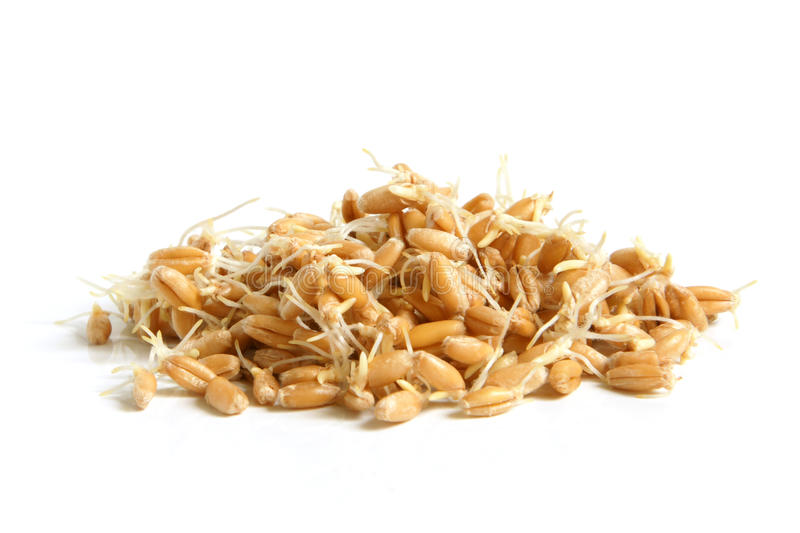 Wheat germs. On a white background royalty free stock photos