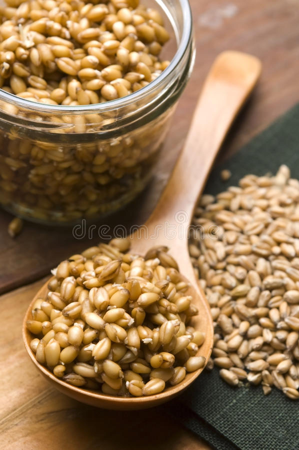 Download Wheat Germs Stock Photography - Image: 24639932