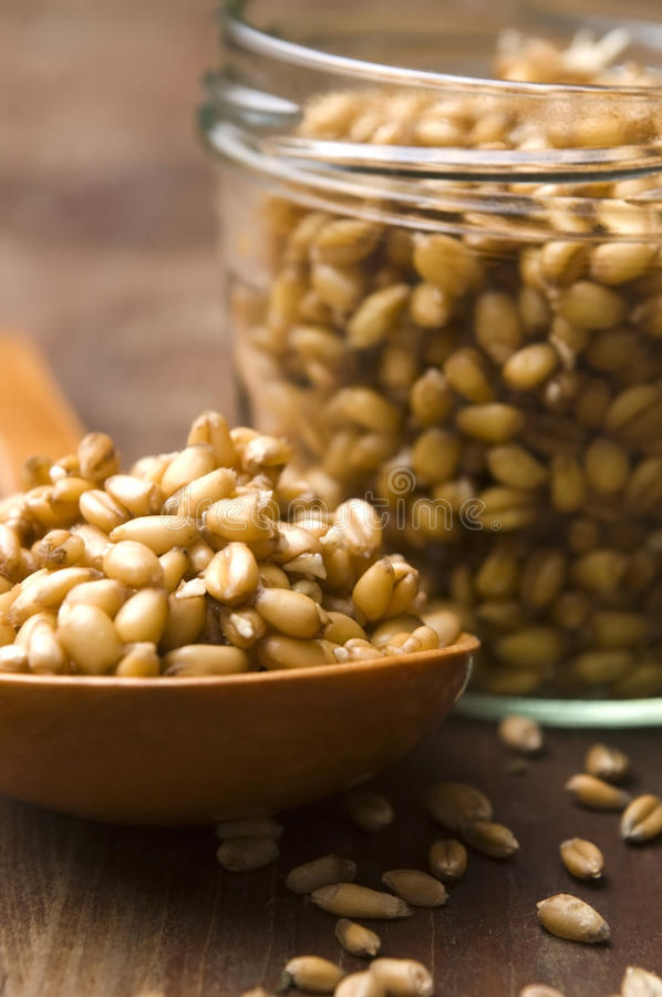 Download Wheat Germs stock photo. Image of health, bunch, germinant - 24640036