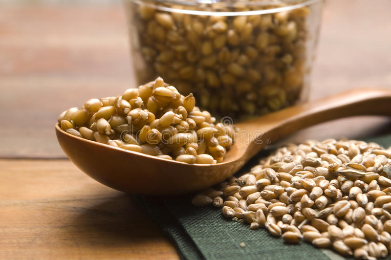 Download Wheat Germs stock image. Image of germinant, germ, natural - 25114669