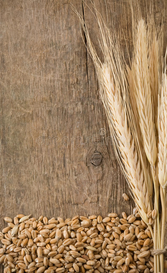 Wheat grain and spike ear royalty free stock image
