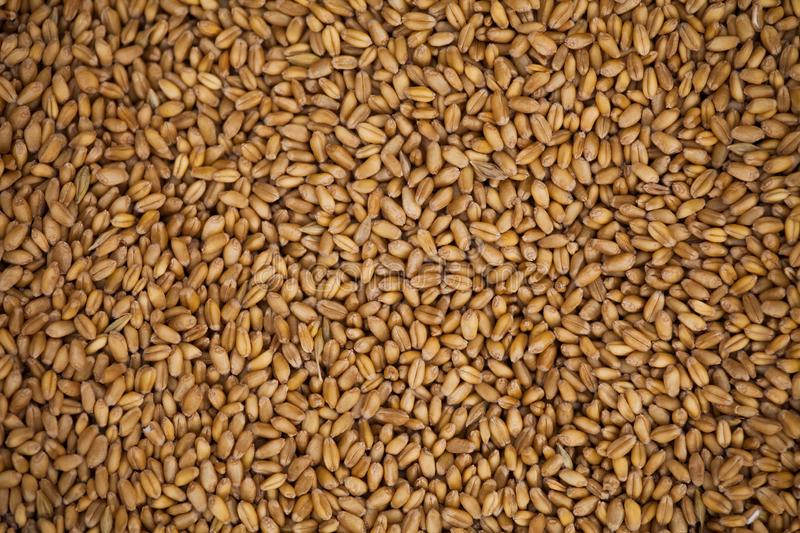 Wheat grains background stock photography