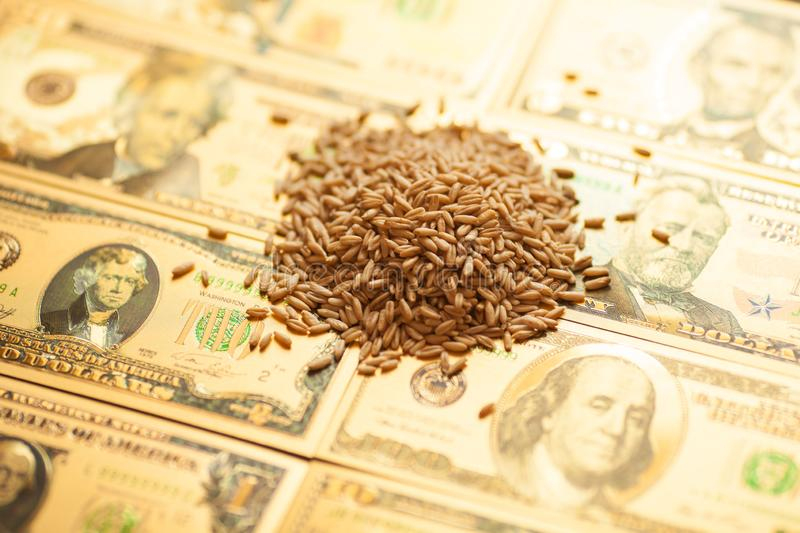 Wheat grains on dollar banknote. Agricultural income concept. royalty free stock photos