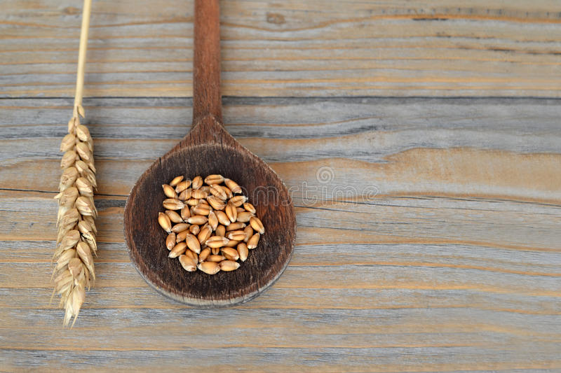 Wheat grains in wooden spoon stock photo