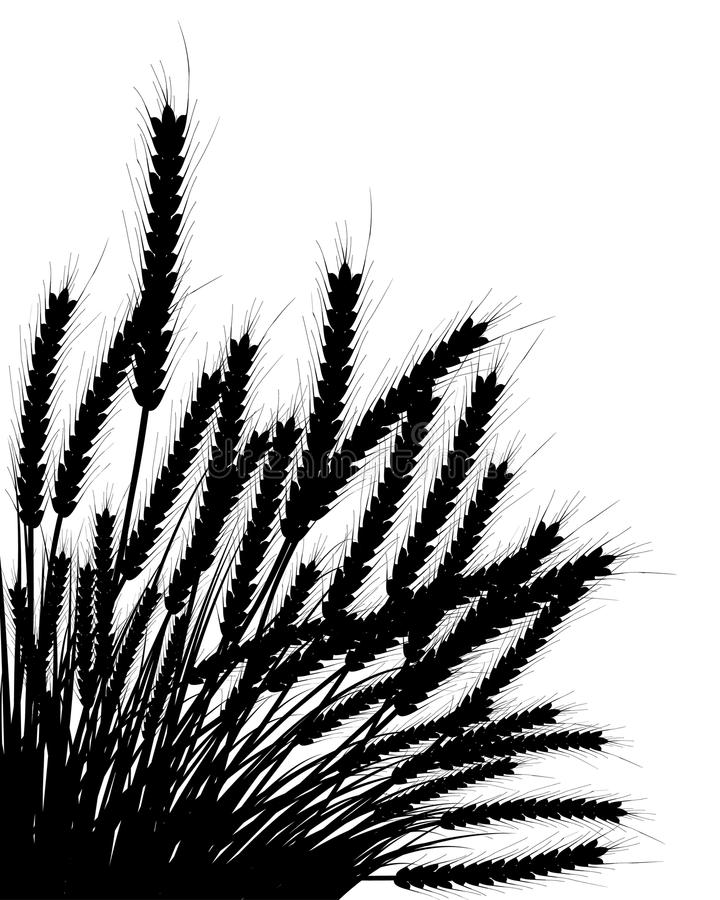 Wheat and grass stock illustration