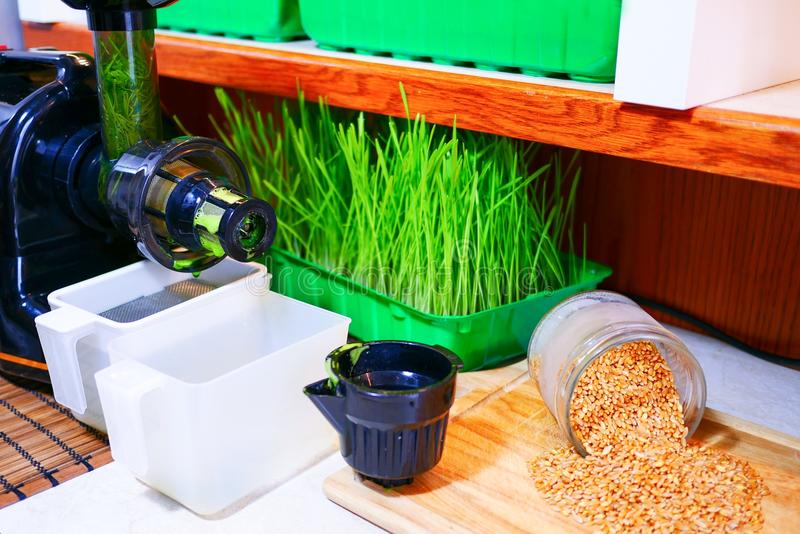 Wheat grass. Fresh wheat grass in a container stock images