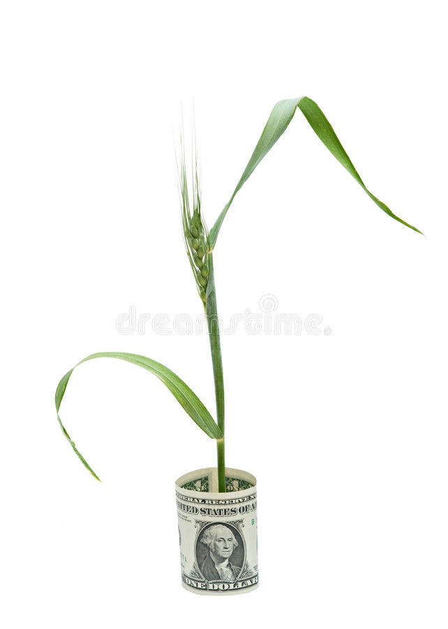 Free Wheat Growing From Folded Dollar Bill Stock Image - 9267231