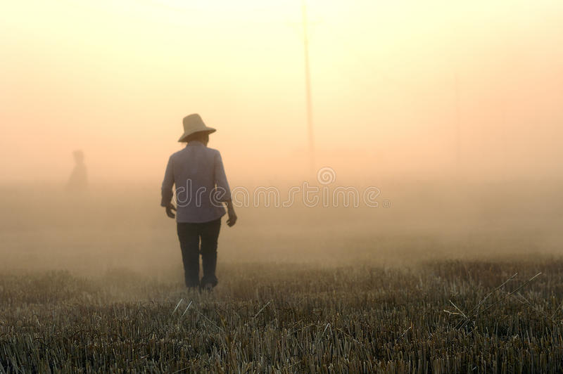 Download Wheat harvest editorial stock photo. Image of food, sunshine - 20052273